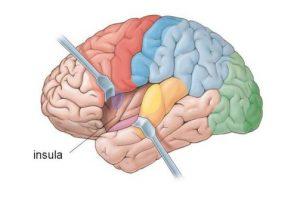 adjustments affect brain function